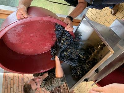 Tłoczenie soku z winogron