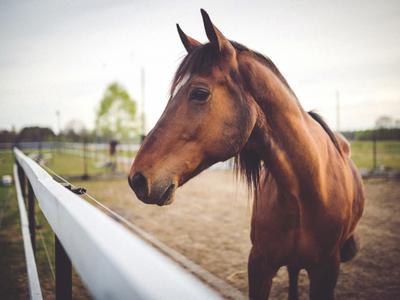 Fotografia przykładowa; koń